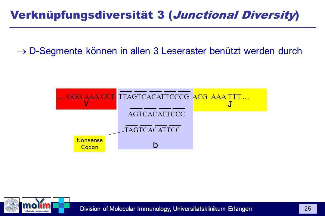 Verknüpfungsdiversität 3 (Junctional Diversity)