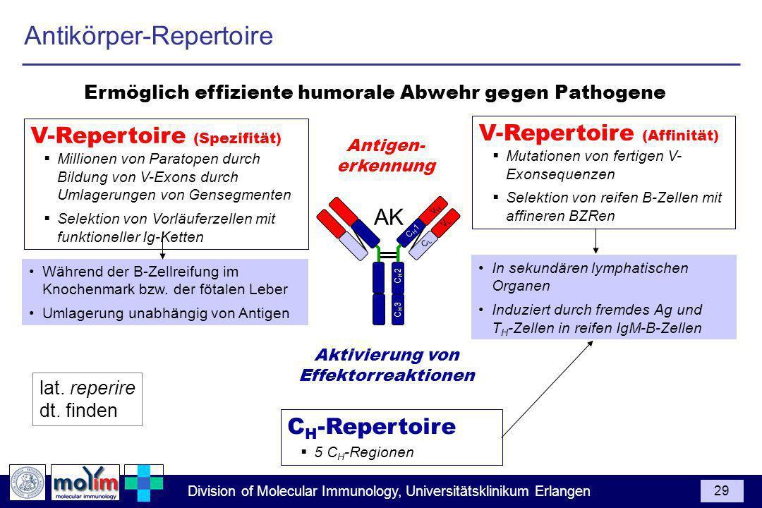 Ermöglich effiziente humorale Abwehr gegen Pathogene