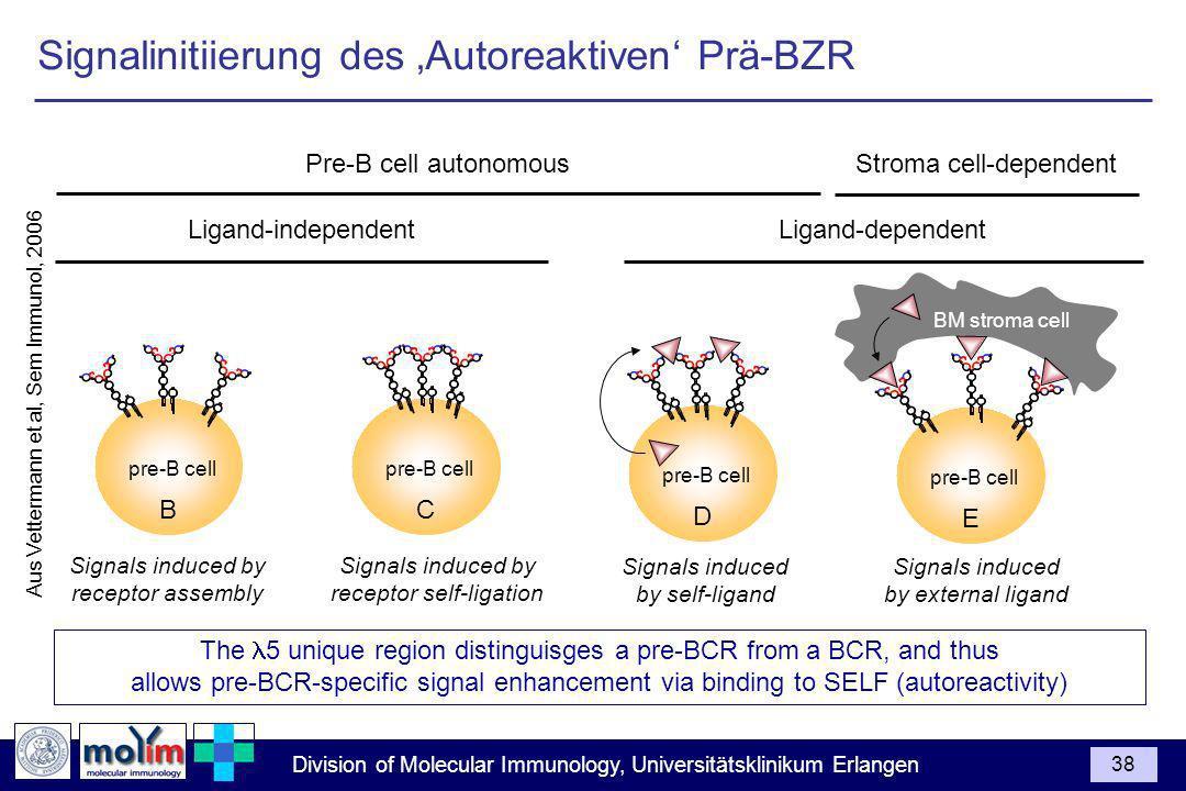 Signalinitiierung des 'Autoreaktiven' Prä-BZR