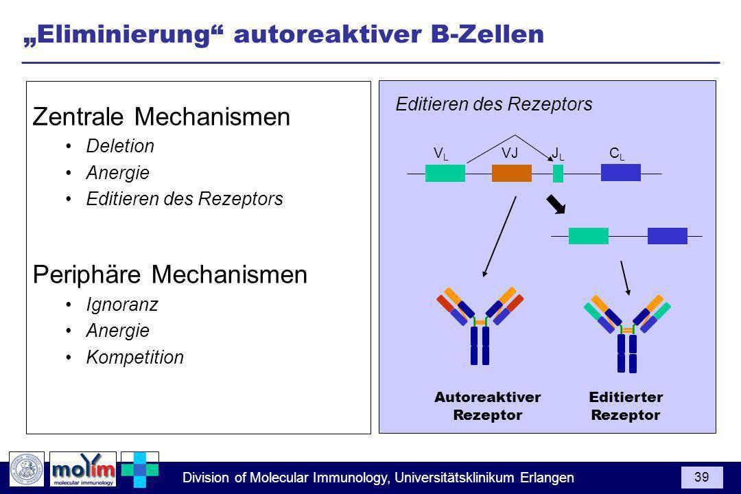 """Eliminierung autoreaktiver B-Zellen"