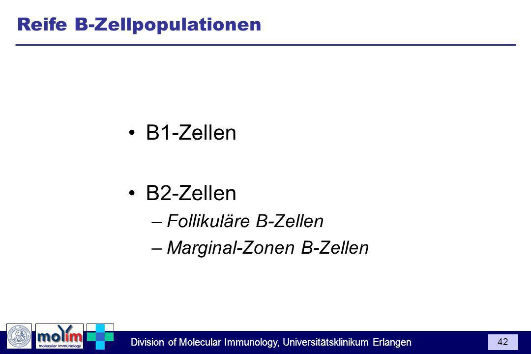 B1-Zellen B2-Zellen Reife B-Zellpopulationen Follikuläre B-Zellen