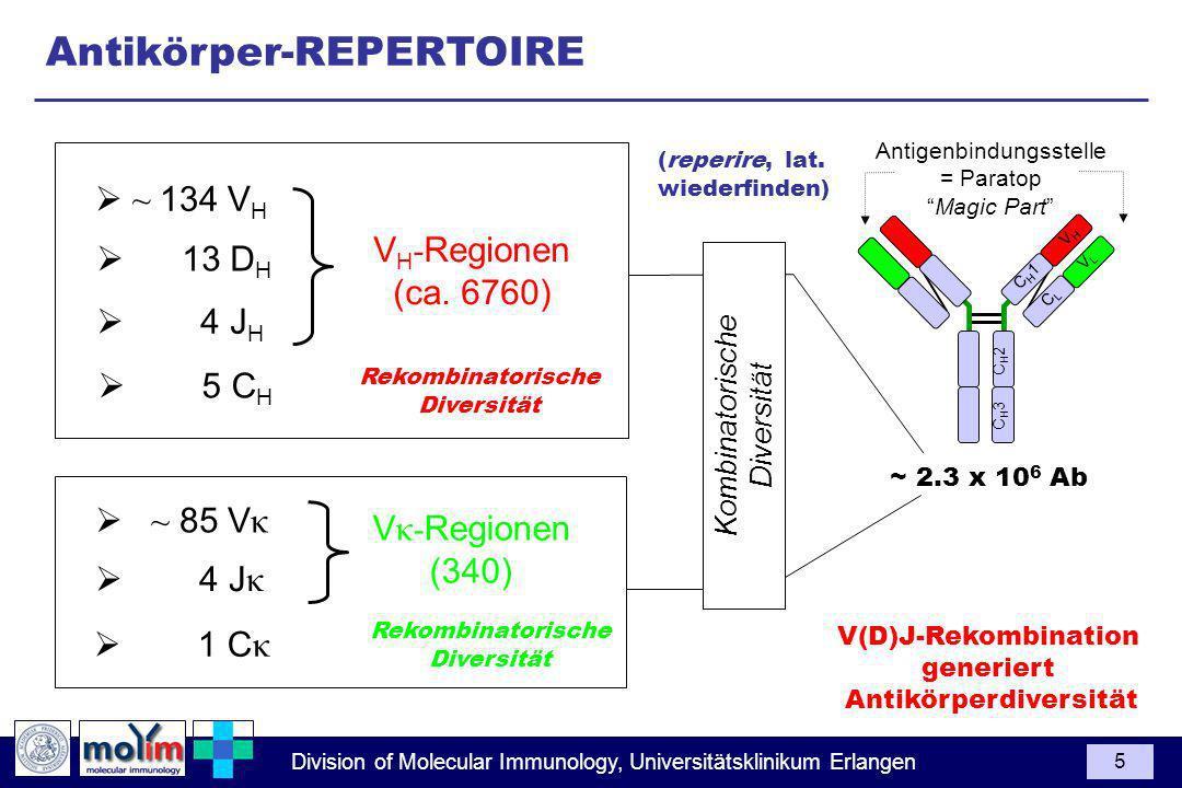 Antikörper-REPERTOIRE