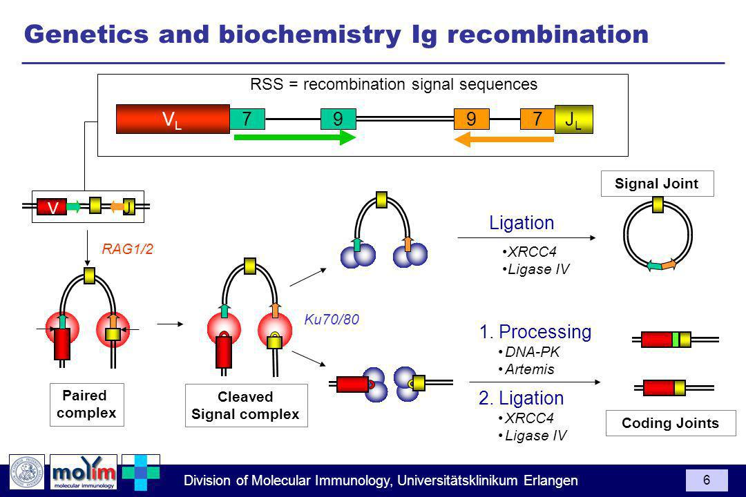 Genetics and biochemistry Ig recombination