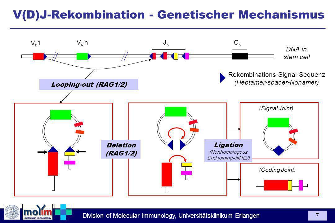 V(D)J-Rekombination - Genetischer Mechanismus