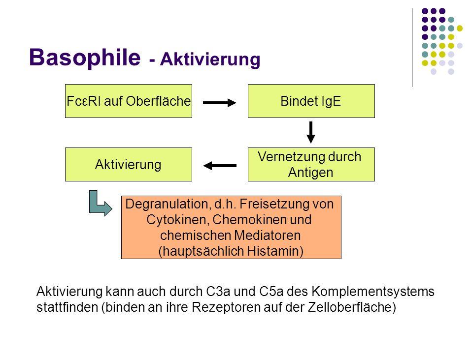 Basophile - Aktivierung