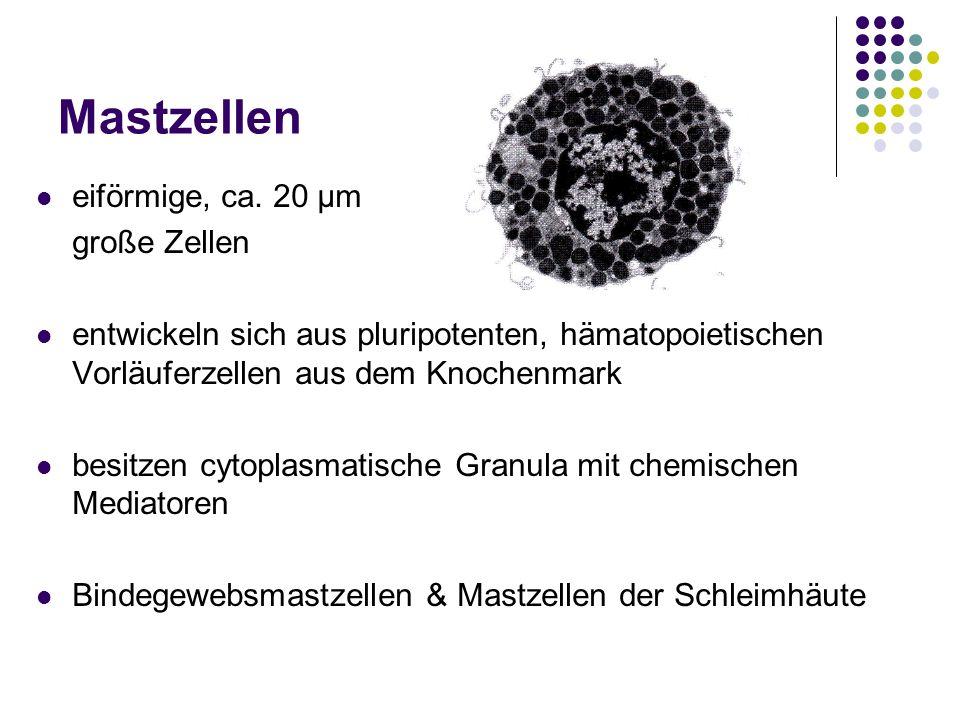 Mastzellen eiförmige, ca. 20 μm große Zellen