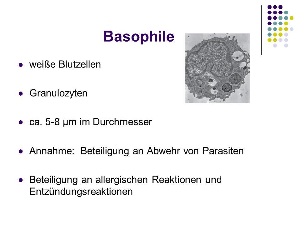 Basophile weiße Blutzellen Granulozyten ca. 5-8 μm im Durchmesser
