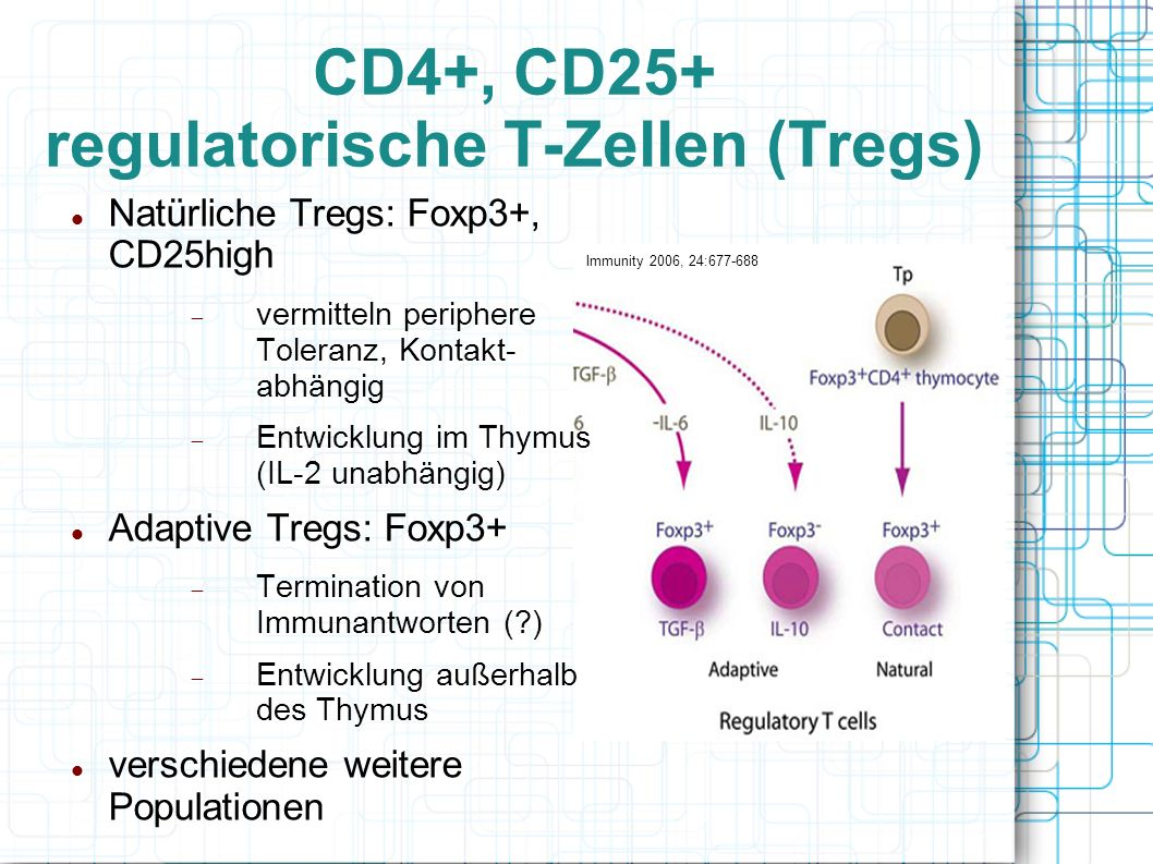 CD4+, CD25+ regulatorische T-Zellen (Tregs)