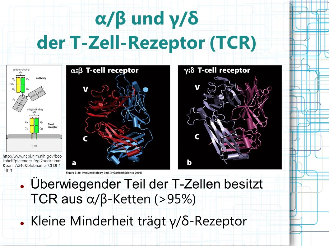 α/β und γ/δ der T-Zell-Rezeptor (TCR)