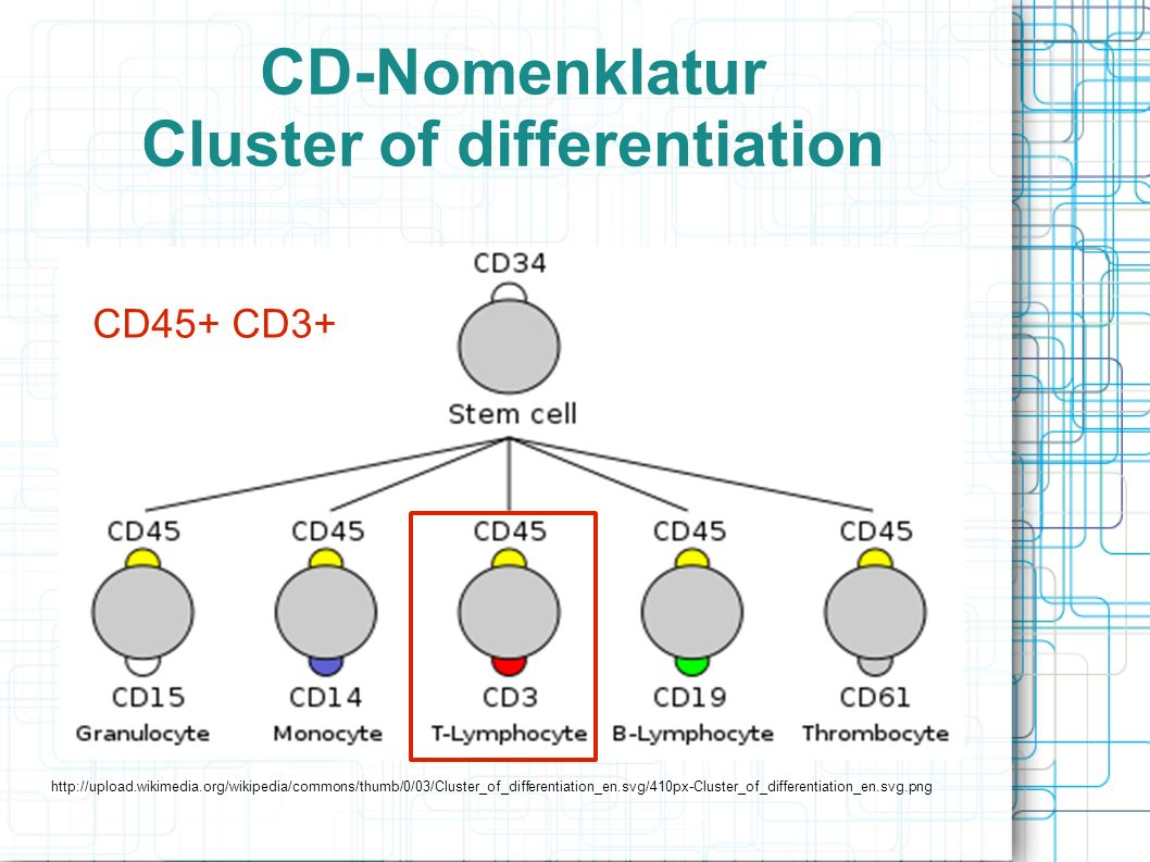 CD-Nomenklatur Cluster of differentiation