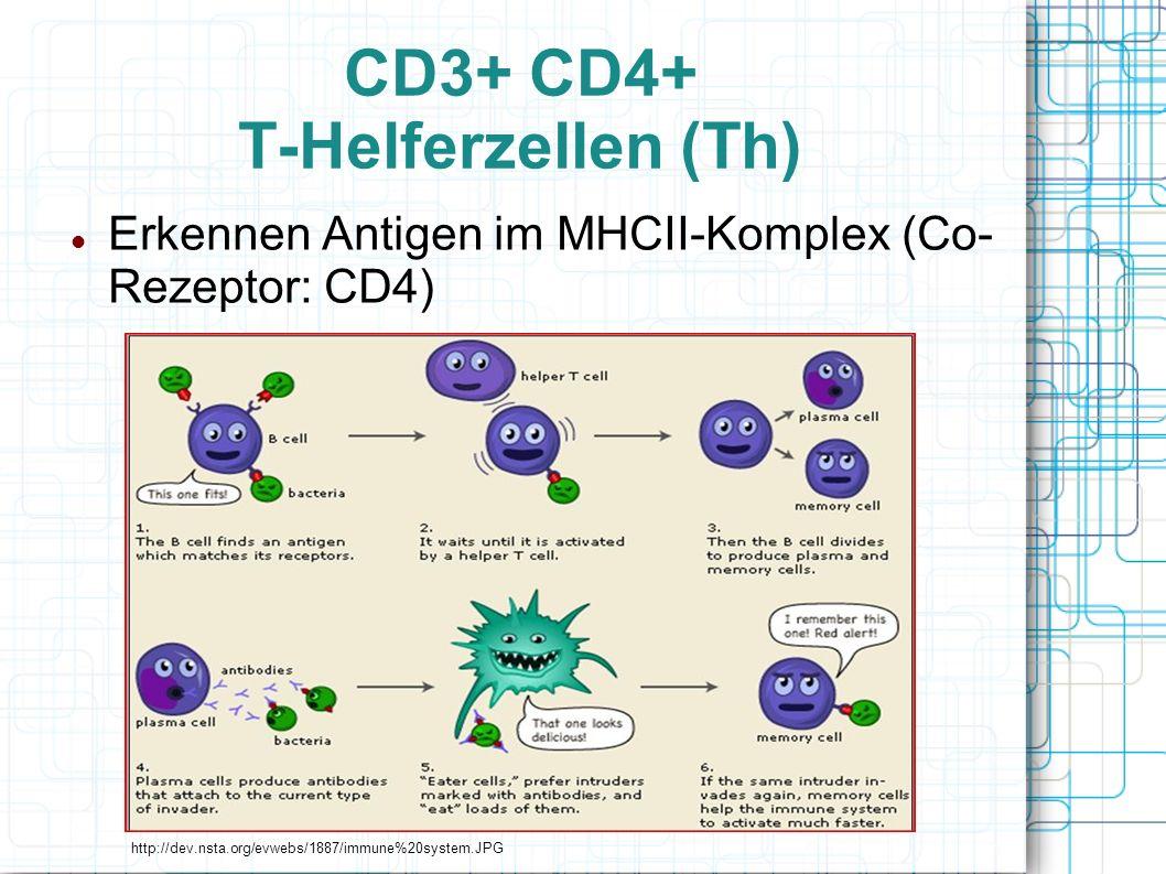 CD3+ CD4+ T-Helferzellen (Th)