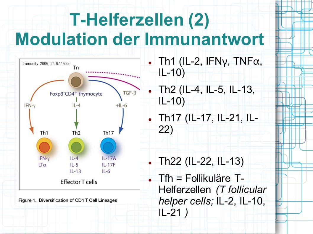 T-Helferzellen (2) Modulation der Immunantwort