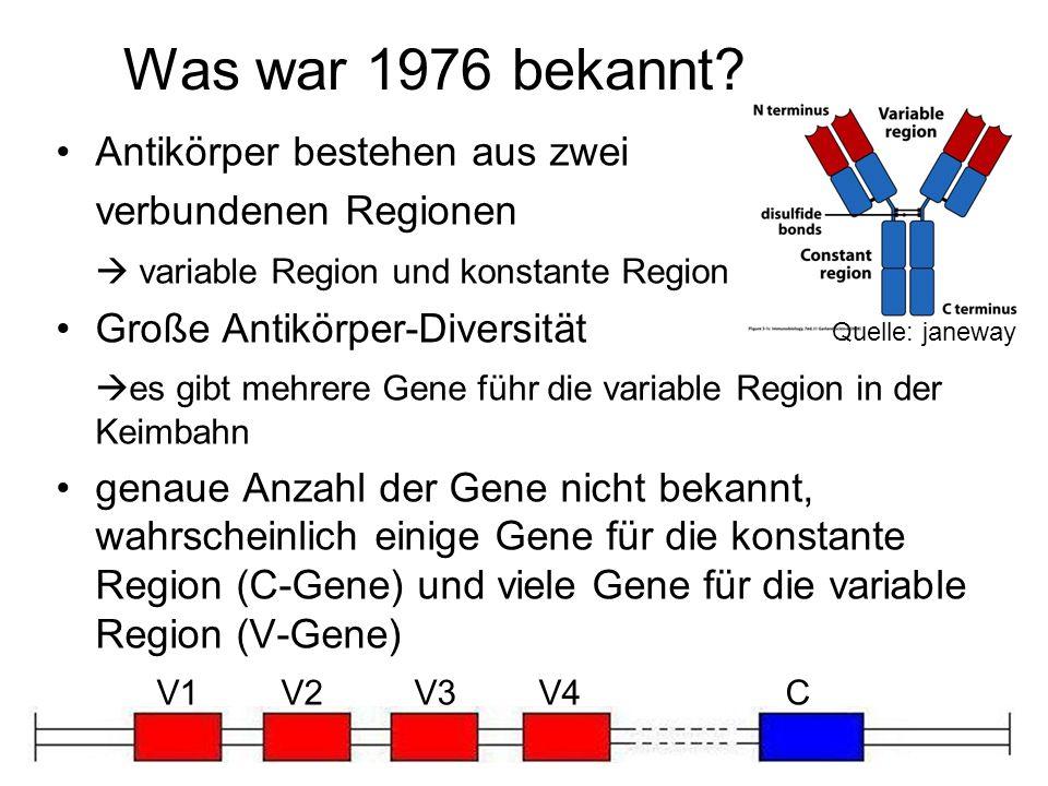 Was war 1976 bekannt Antikörper bestehen aus zwei