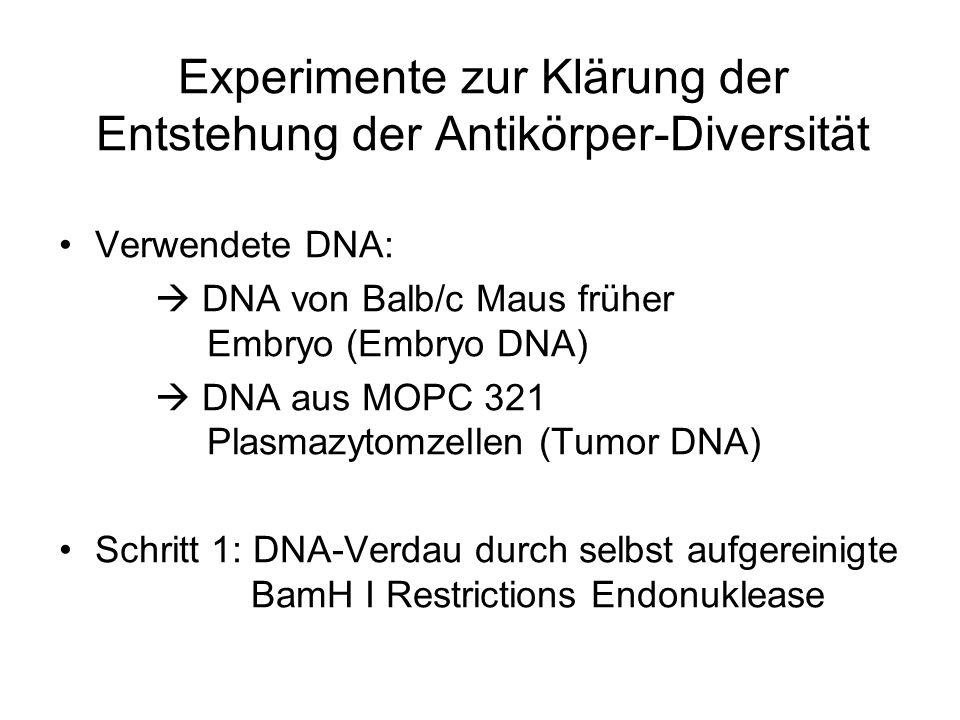 Experimente zur Klärung der Entstehung der Antikörper-Diversität