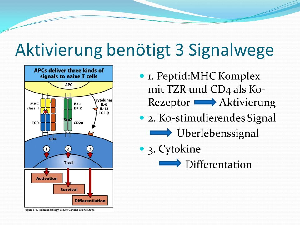 Aktivierung benötigt 3 Signalwege