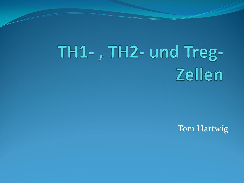 TH1- , TH2- und Treg- Zellen