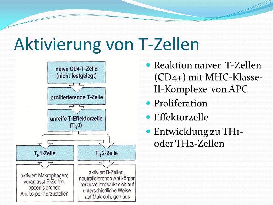 Aktivierung von T-Zellen