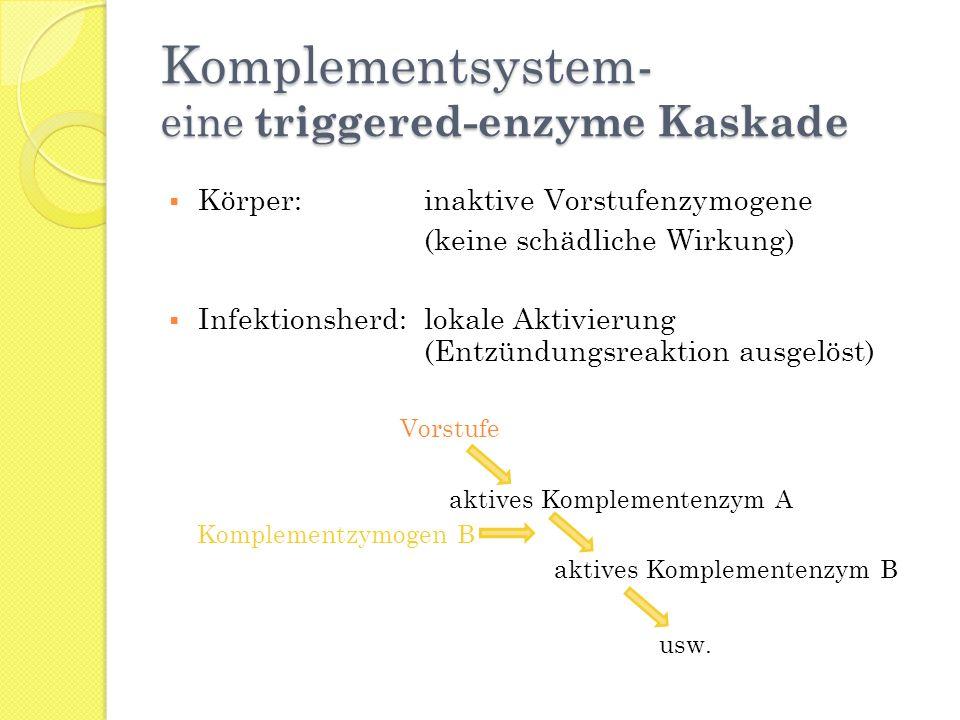 Komplementsystem- eine triggered-enzyme Kaskade
