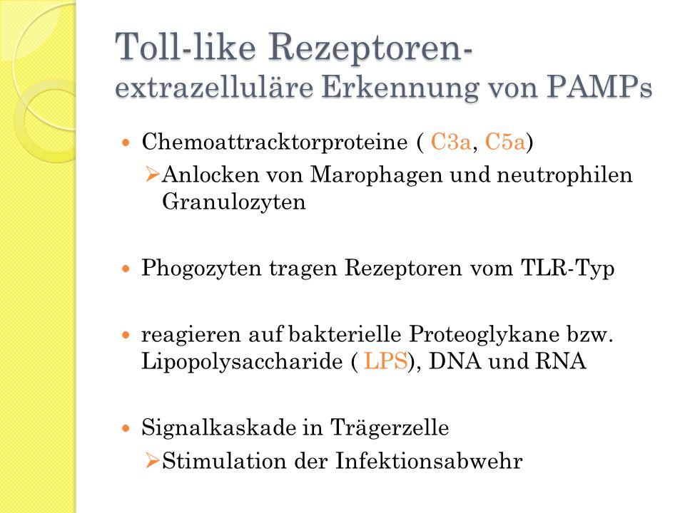 Toll-like Rezeptoren- extrazelluläre Erkennung von PAMPs