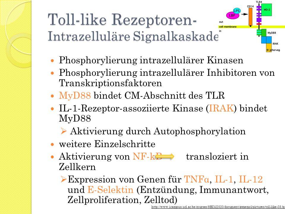 Toll-like Rezeptoren- Intrazelluläre Signalkaskade