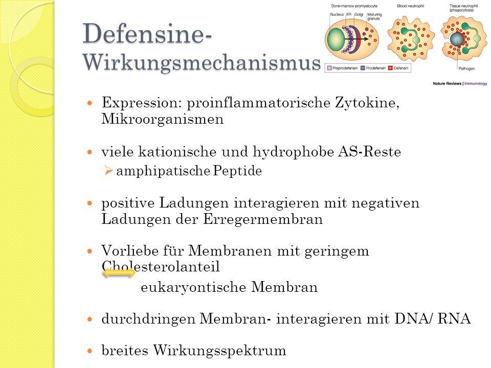 Defensine- Wirkungsmechanismus