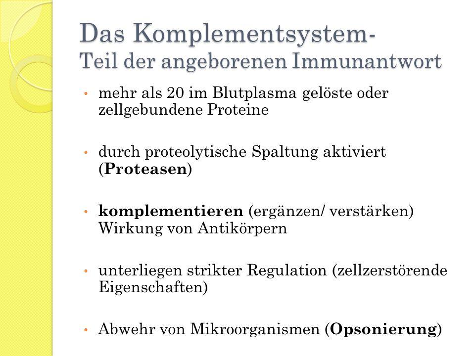 Das Komplementsystem- Teil der angeborenen Immunantwort