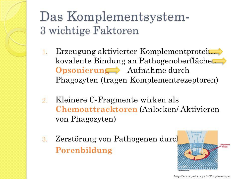 Das Komplementsystem- 3 wichtige Faktoren