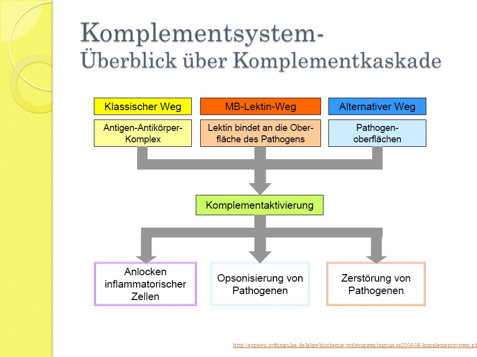 Komplementsystem- Überblick über Komplementkaskade