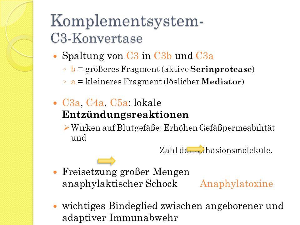 Komplementsystem- C3-Konvertase