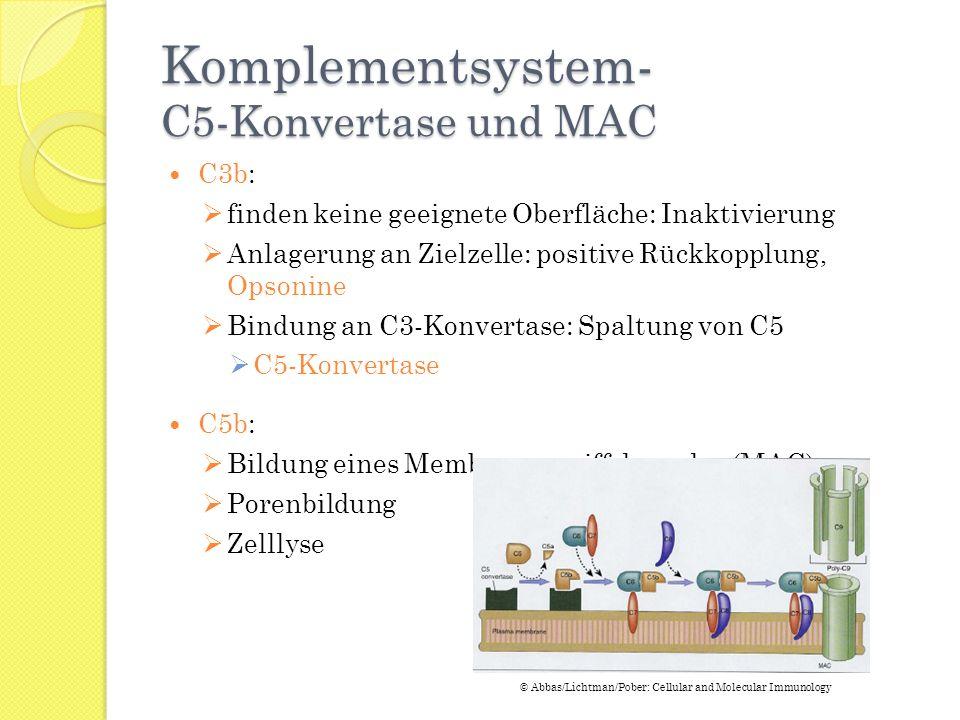 Komplementsystem- C5-Konvertase und MAC