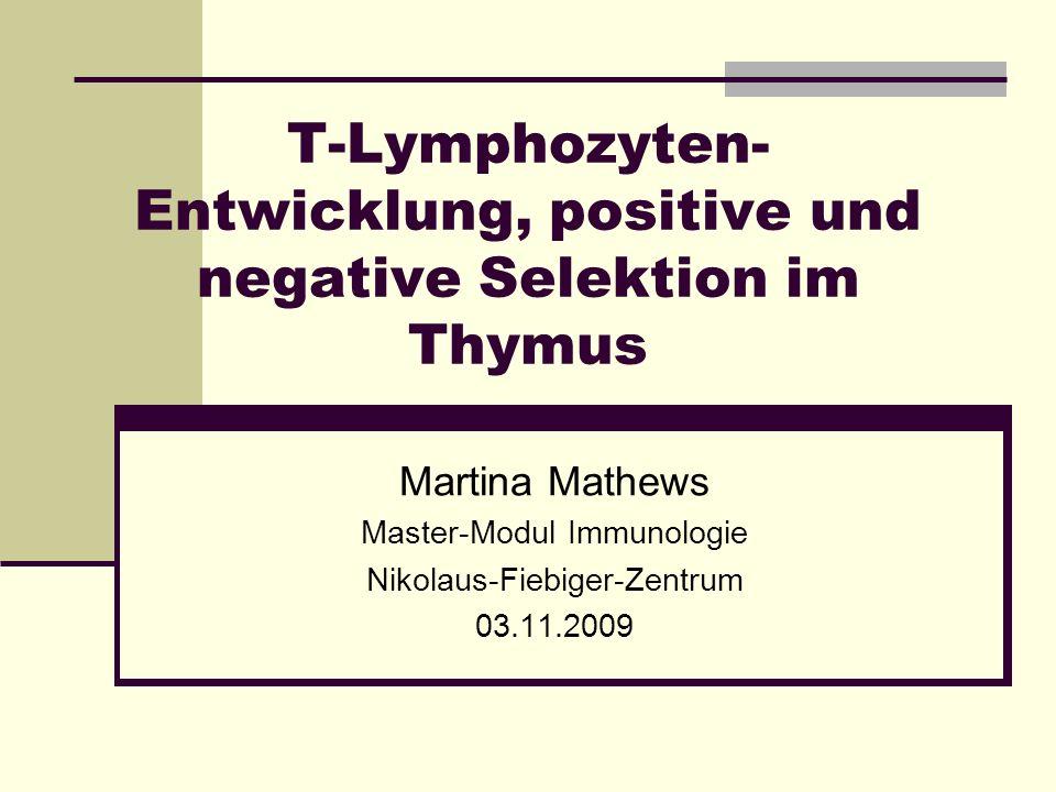 T-Lymphozyten-Entwicklung, positive und negative Selektion im Thymus