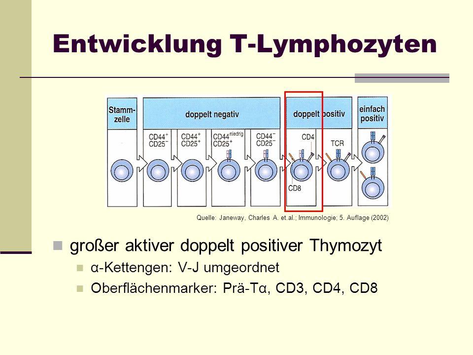 Entwicklung T-Lymphozyten