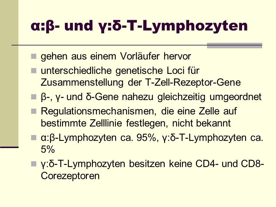 α:β- und γ:δ-T-Lymphozyten