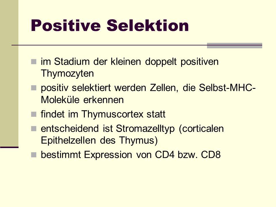 Positive Selektion im Stadium der kleinen doppelt positiven Thymozyten