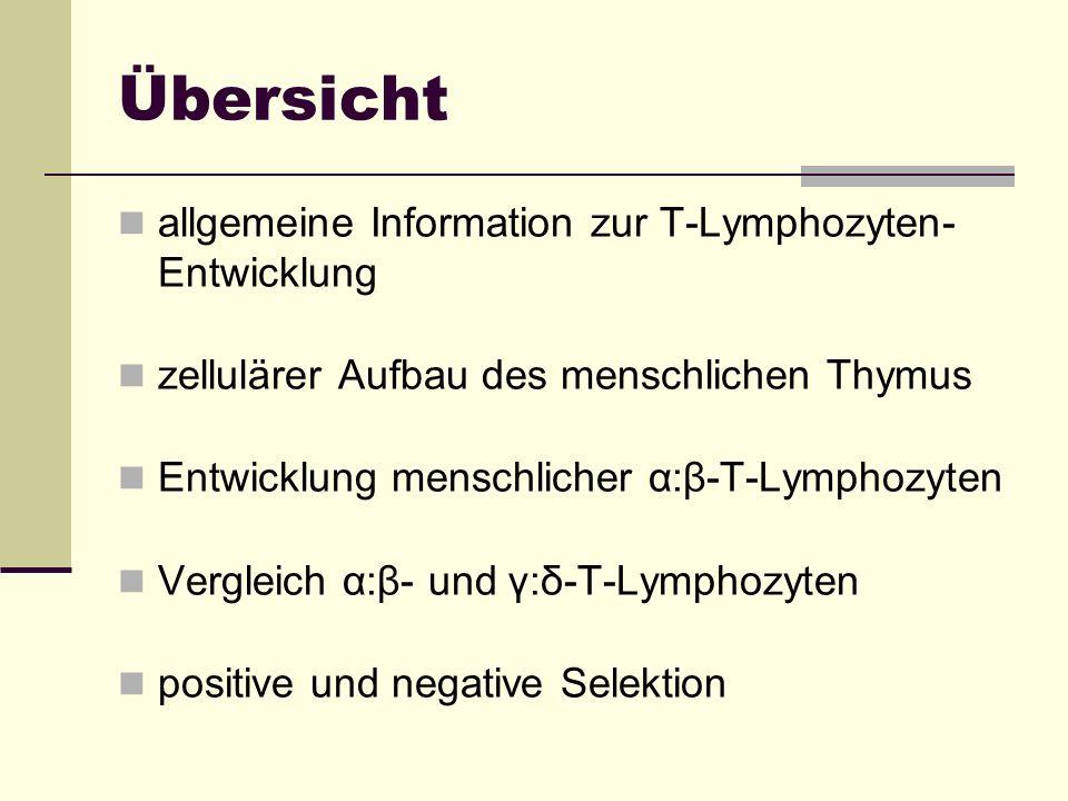 Übersicht allgemeine Information zur T-Lymphozyten-Entwicklung