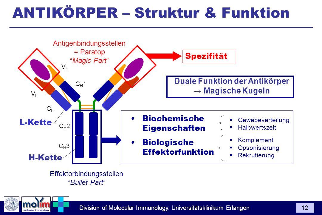Duale Funktion der Antikörper