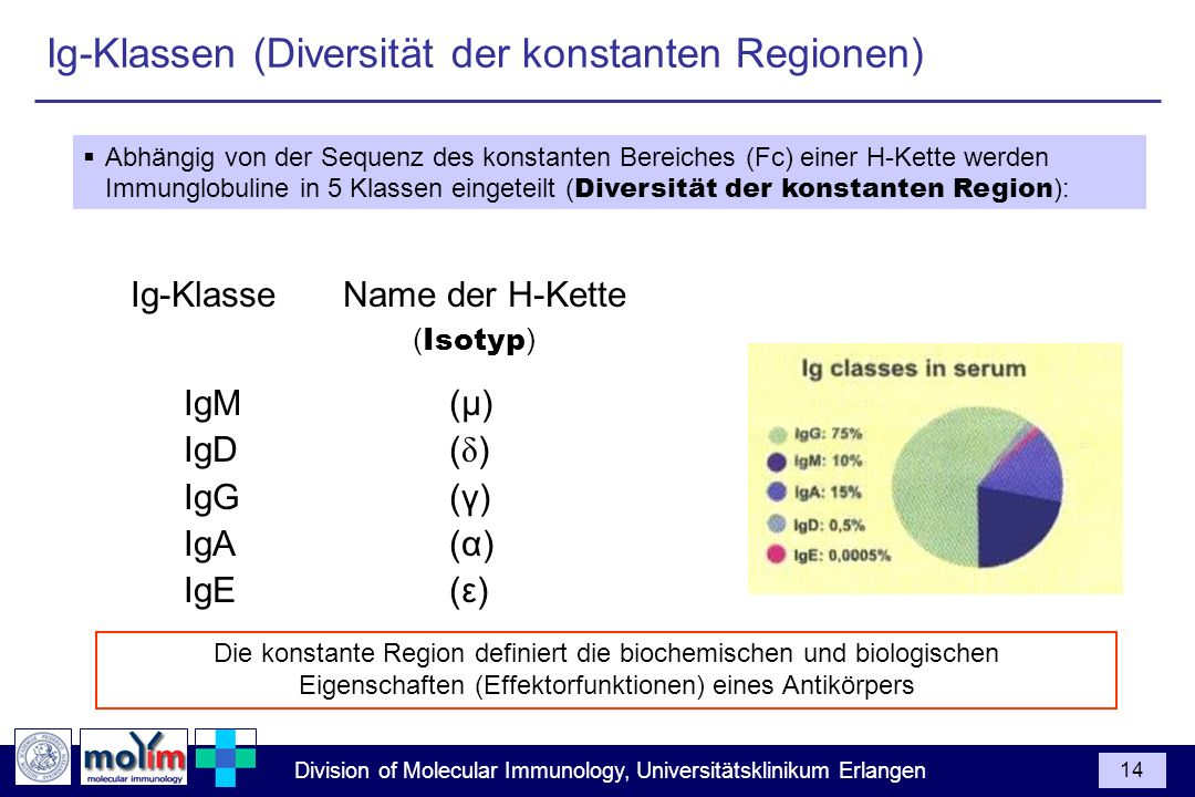 Ig-Klassen (Diversität der konstanten Regionen)