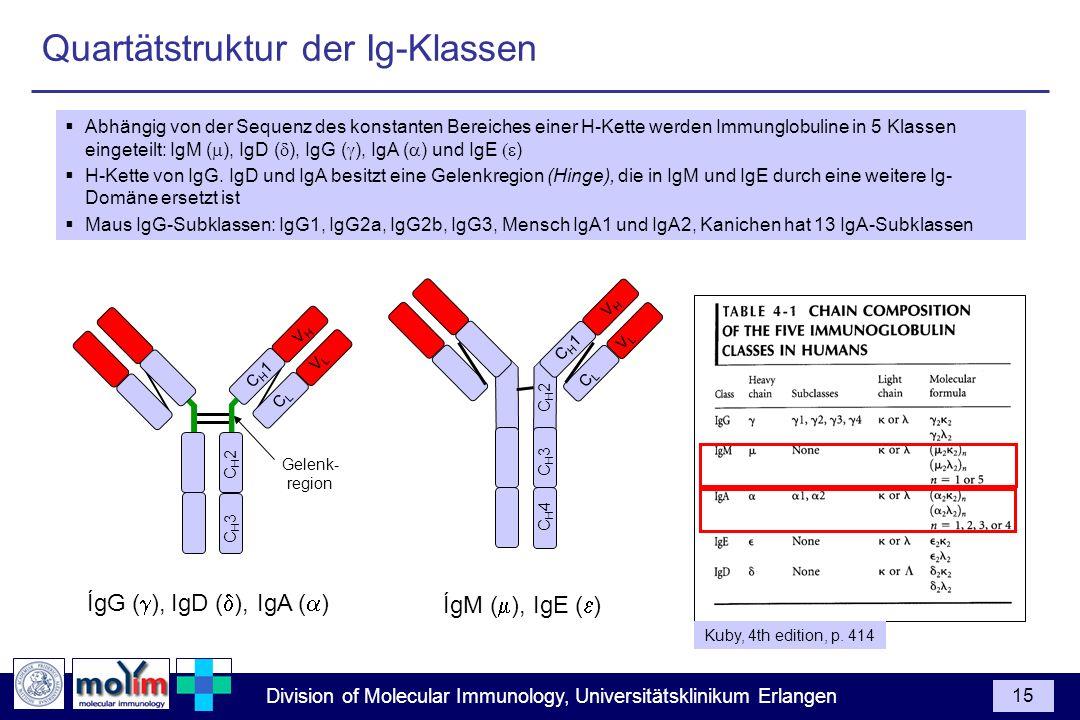 Quartätstruktur der Ig-Klassen