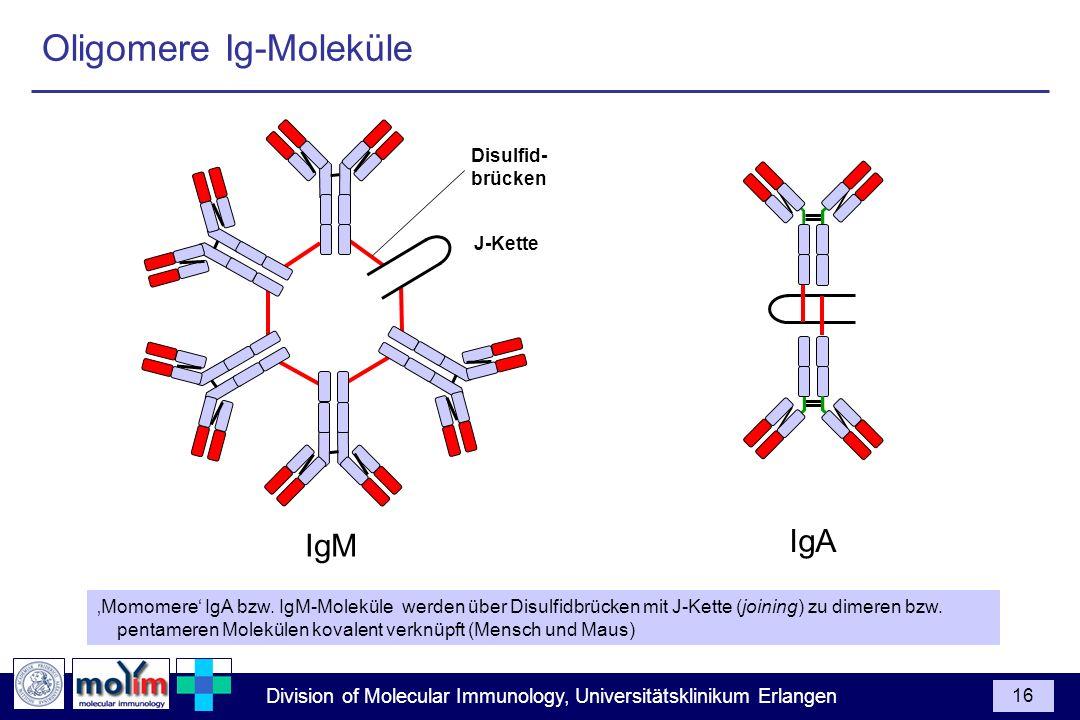 Oligomere Ig-Moleküle