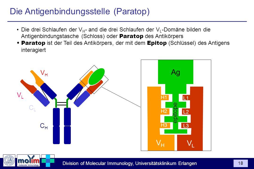 Die Antigenbindungsstelle (Paratop)