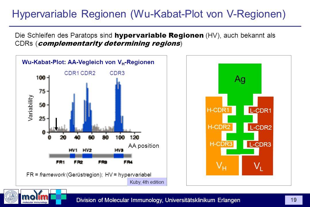 FR = framework (Gerüstregion); HV = hypervariabel
