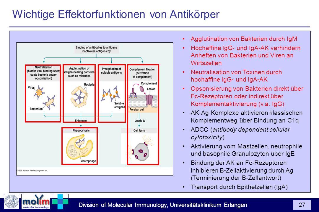 Wichtige Effektorfunktionen von Antikörper