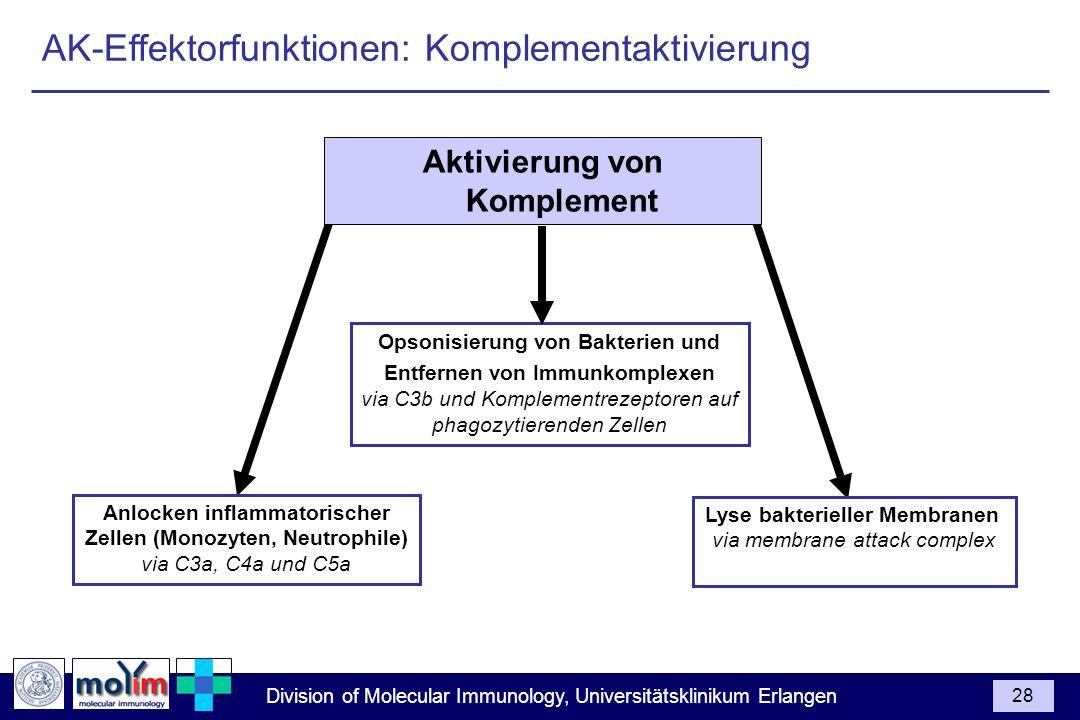 AK-Effektorfunktionen: Komplementaktivierung