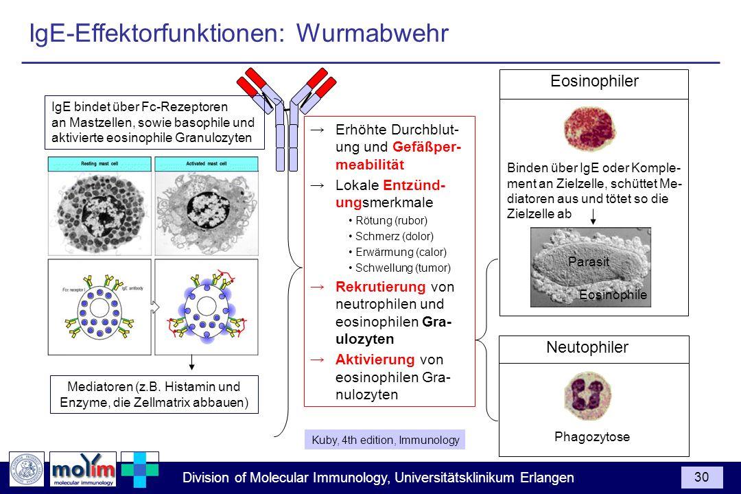 Mediatoren (z.B. Histamin und Enzyme, die Zellmatrix abbauen)