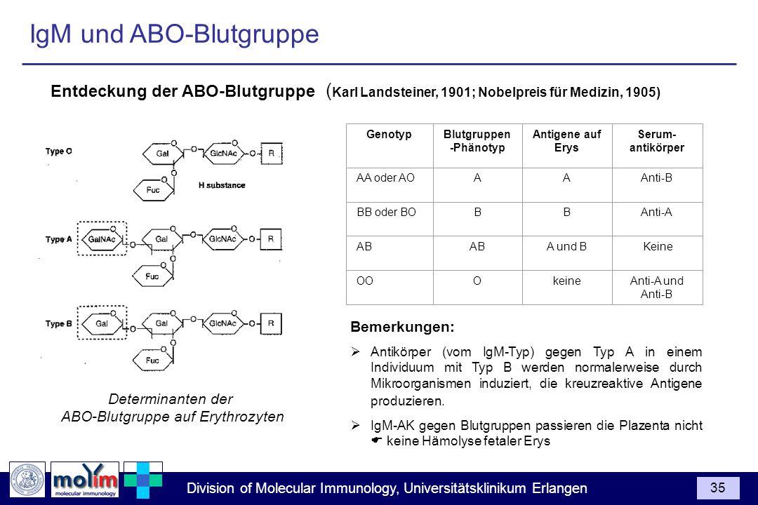 IgM und ABO-Blutgruppe