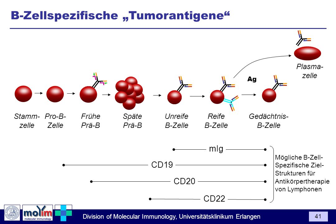 "B-Zellspezifische ""Tumorantigene"