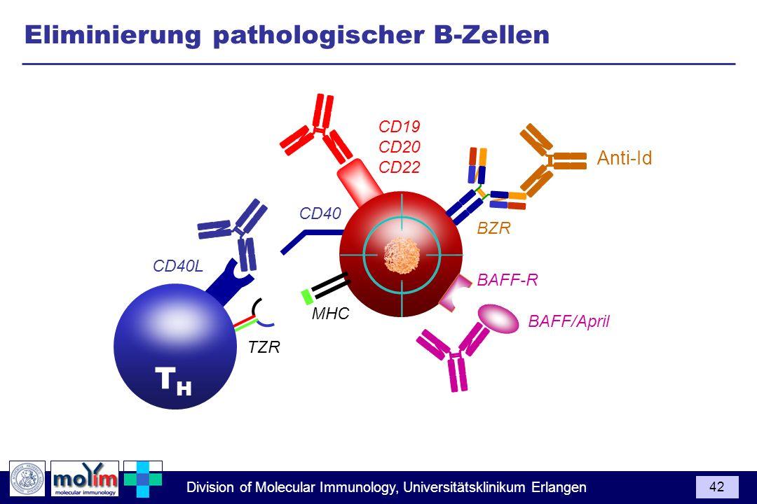 TH Eliminierung pathologischer B-Zellen Anti-Id 1 2 CD19 CD20 CD22