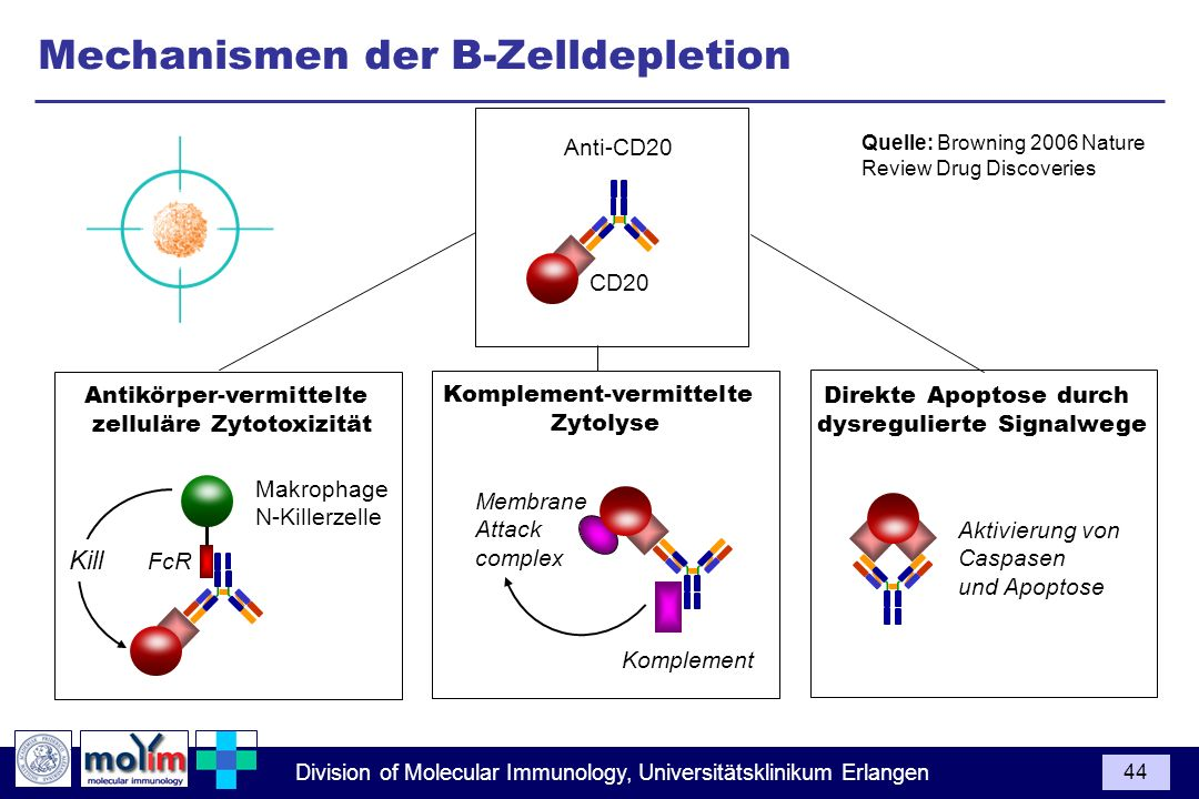 Mechanismen der B-Zelldepletion