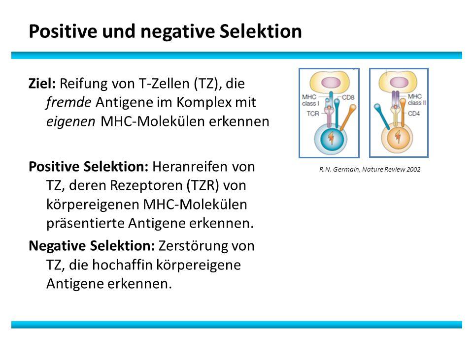 Positive und negative Selektion
