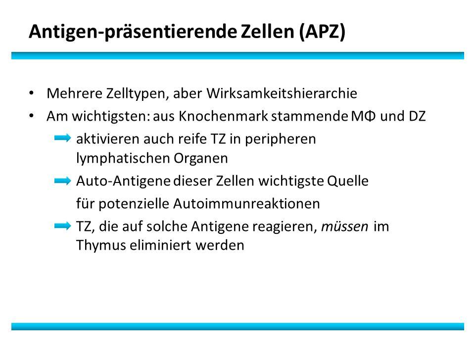Antigen-präsentierende Zellen (APZ)